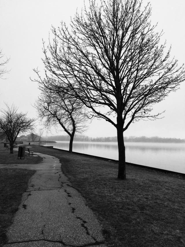 trees-at-detroit-river